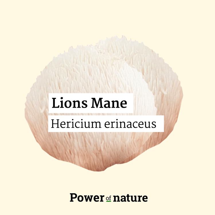 Lions mane power of nature