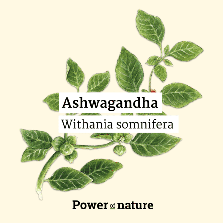 Power-of-nature-brain-support-ashwaganda